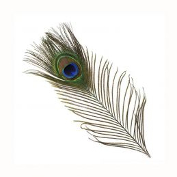 PEACOCK EYE VENIARD - 1