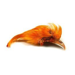 GOLDEN PHEASANT TOPPIN CREST ORANGE VENIARD - 1