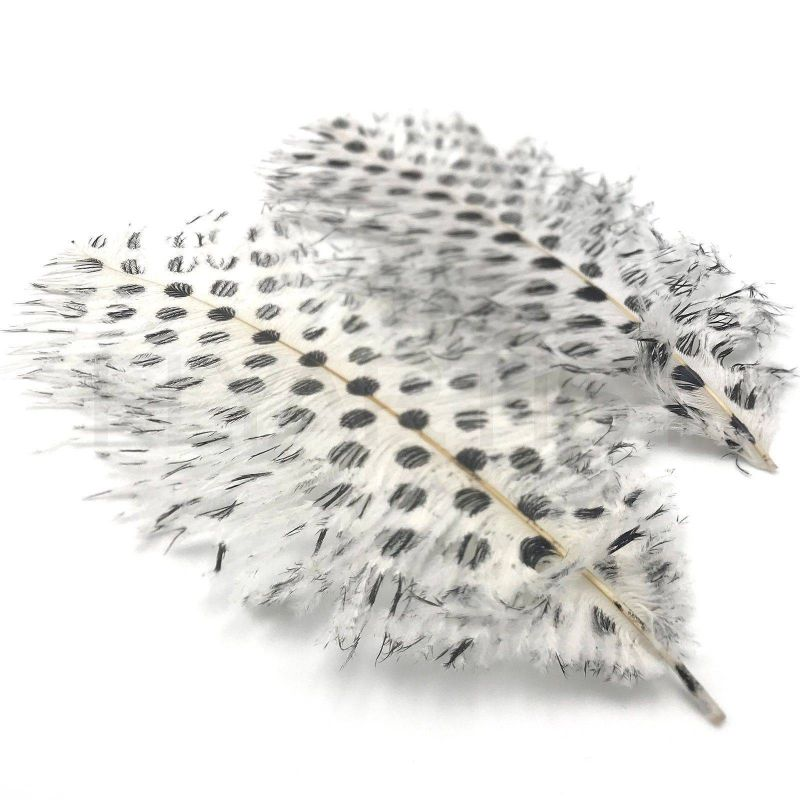 SIGNATURE INTRUDER DRABS - WHITE DOTTED
