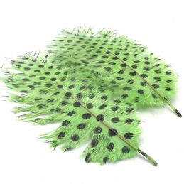 SIGNATURE INTRUDER DRABS - CHARTREUSE DOTTED